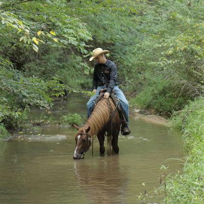 Straight Path Horses